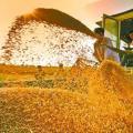 四月份粮食生产的时政消息是不少种粮农民关心话题