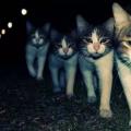 比心应用程序独家发售猫神限量版盲盒,遭疯抢!