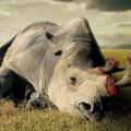 今日视界关注如今人们保护野生动物行为大多是种自私的表现