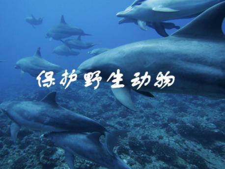 中国保护野生动物第一人就是南京红山森林动物园园长沈志军