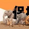 今日视界深挖杭州野生动物视界背后实际控制人与集团背景