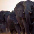 今日关注人物是一直致力于救助和放生野生动物的沈志军