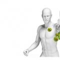 今日独家关注夏季人们吃什么食物能够有效提升人体免疫力?