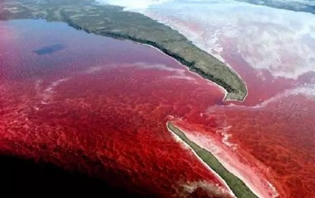 沿海城市出现赤潮现象会导致人们生活餐桌中海鲜变成毒药