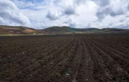 最新时政消息显示我国的东北粮食生产主要依赖黑土地