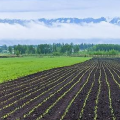 我国黑龙江地区拥有肥沃肥力的黑土地正在遭受刮地皮式盗挖