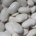 为什么健康饮食指南推荐国人在夏天多吃一些白扁豆对身体好